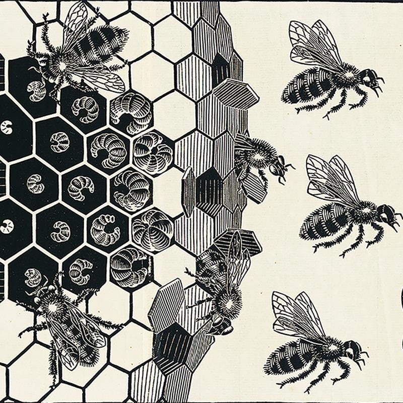 0636202 M.C. Escher  Metamorphose II